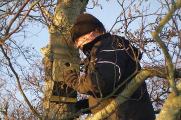 A walk on the wild side – Nest boxes
