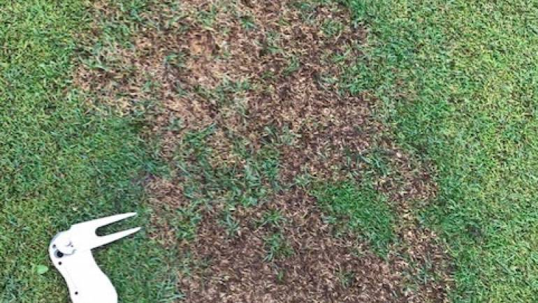 Head Greenkeeper Report – August 2019
