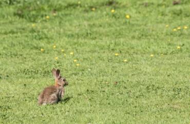 Addressing the problem of rabbits